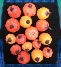 BR73848:  MINI PUMPKINS IN A BAG ORANGE/YELLOW