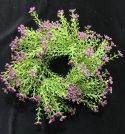 "FG8622NP:  ASTILBE RING 3.5"" CENTER NEW PURPLE"